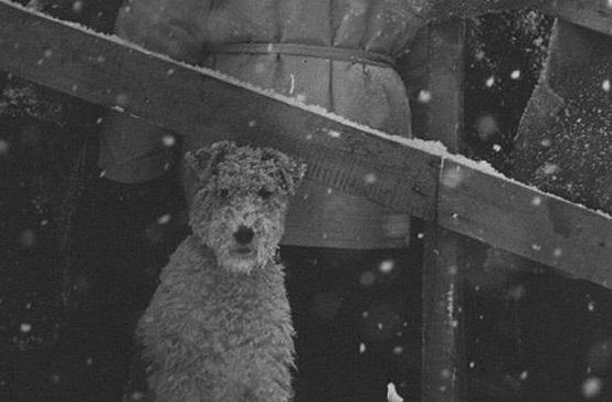 """""""Не мое собачье дело"""" в Уфе!"""