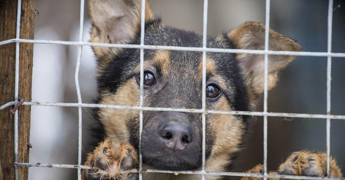 """""""Собаки пропадают в неизвестном направлении"""": Уфа в отстутствии приюта для животных"""