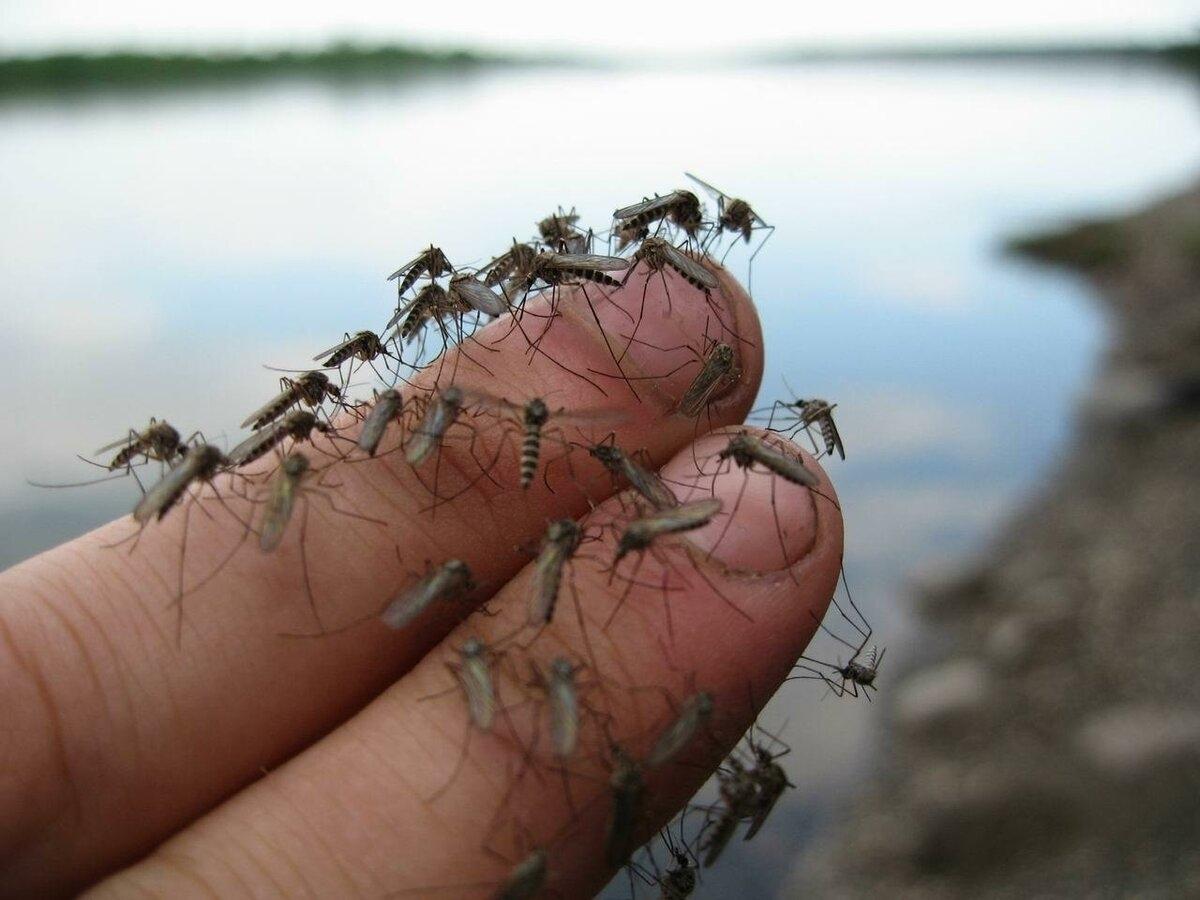 Почему так много комаров в Уфе? И будут ли их травить?