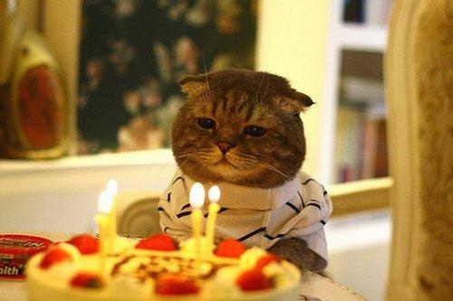 Отмечаете ли вы день рождения на работе