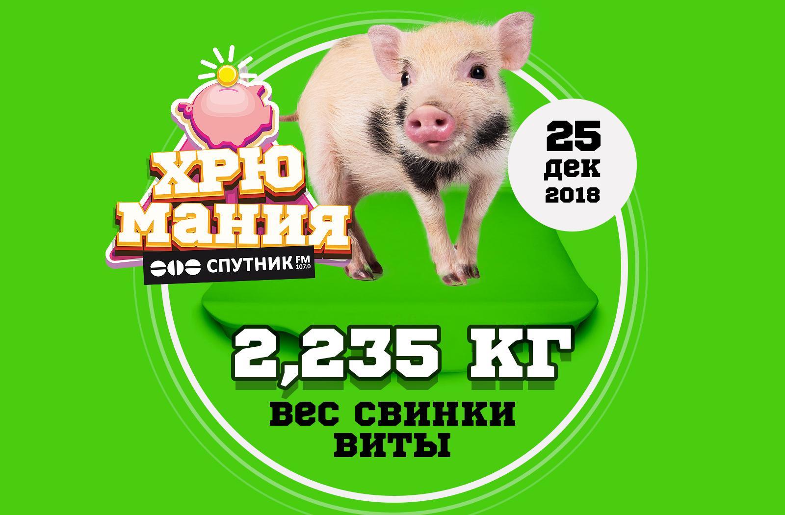 """""""ХрюМания"""": вес Виты 25 декабря"""