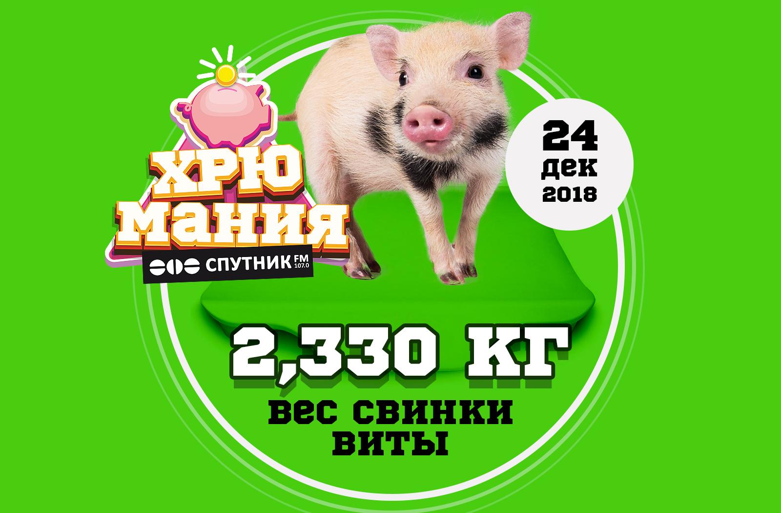 """""""ХрюМания"""": вес Виты 24 декабря"""